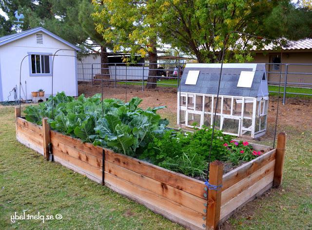 vegetable_garden_raised_bed_flood_irrigated_lot